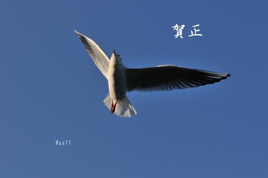 D300_12272 card.jpg